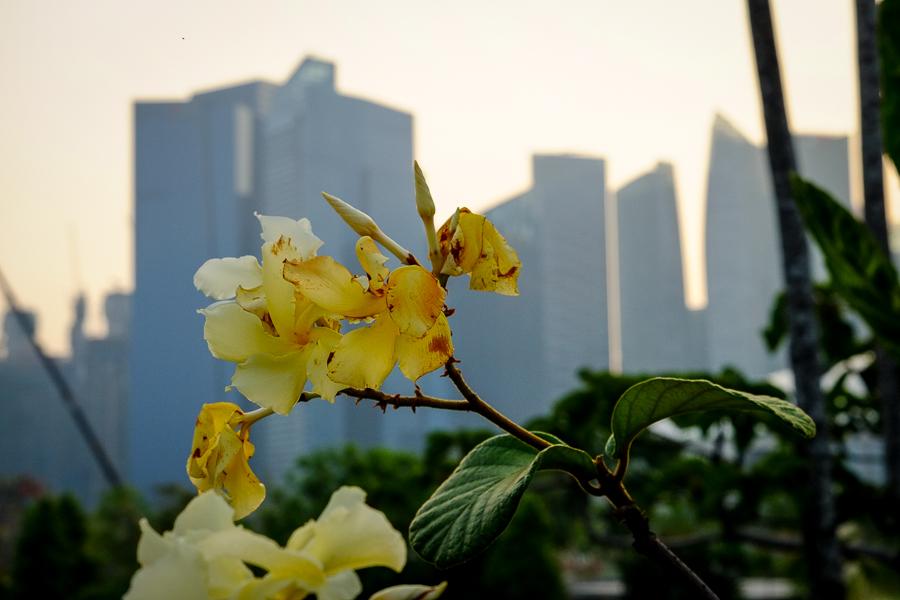 Fleurs et skyline de Singapour.