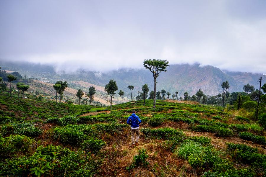 Dans la vallée d'Haputale au Sri Lanka.
