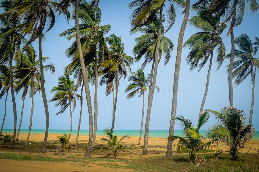 Les palmiers de la plage de Lomé, au Togo.