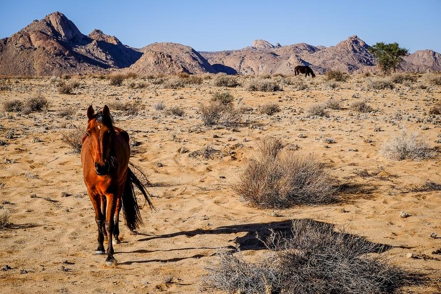 Un cheval sauvage dans le désert de Namibie.